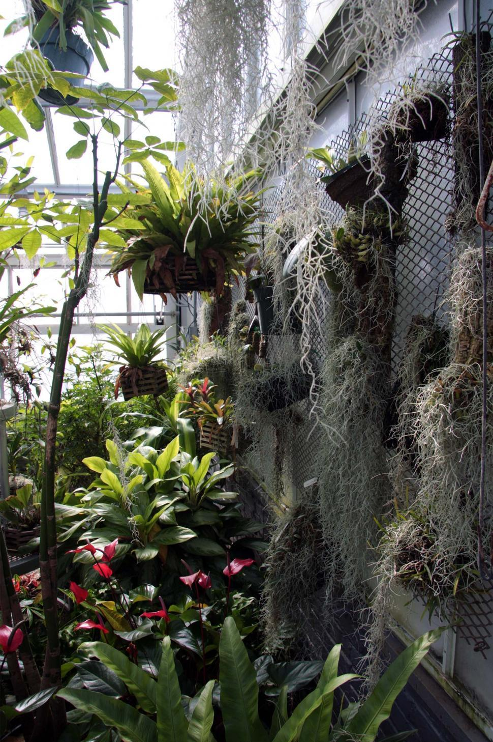 Download Free Stock HD Photo of Greenhouse for Orchids Online