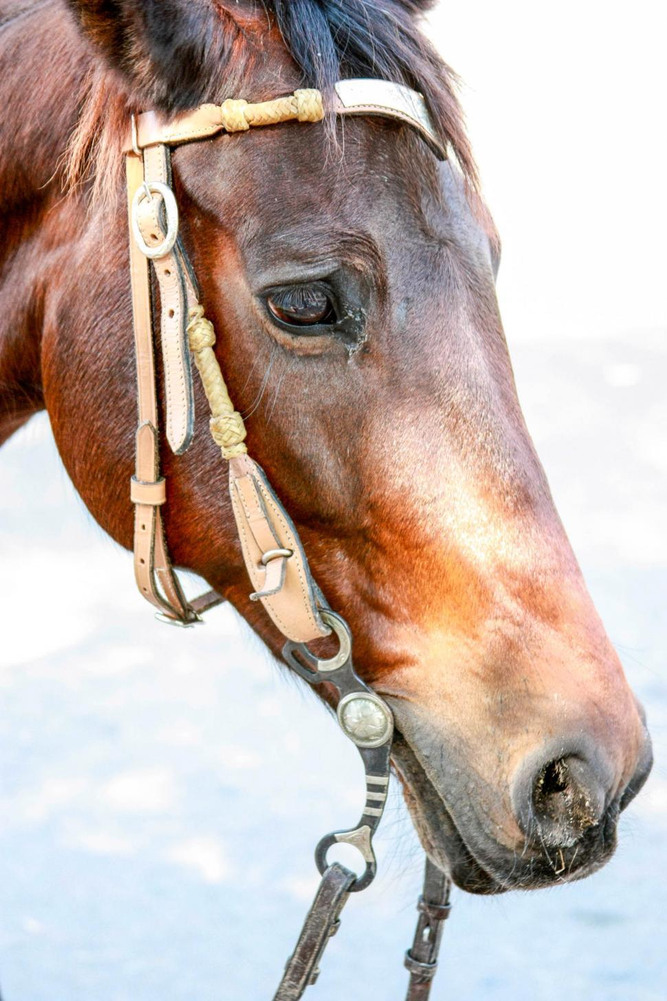 Download Free Stock HD Photo of Horse Face Online