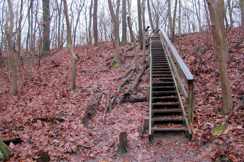 Free image of Steep Wooden step in the woods at Cheesequake State park