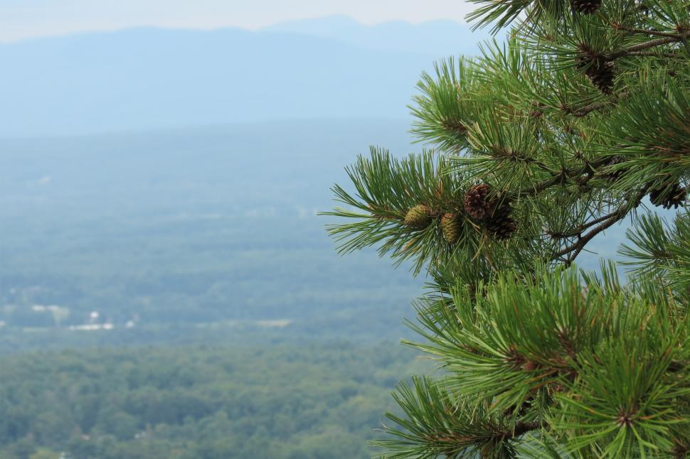 Download Free Stock HD Photo of Pine Cones Online