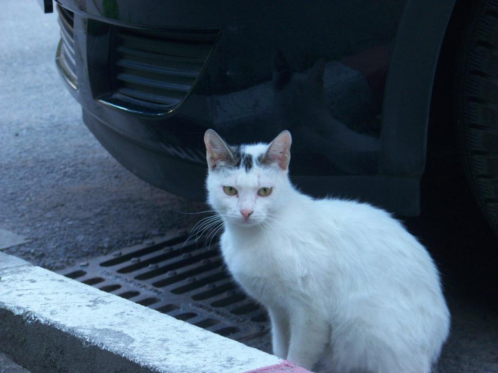 Download Free Stock HD Photo of Cat under a car Online