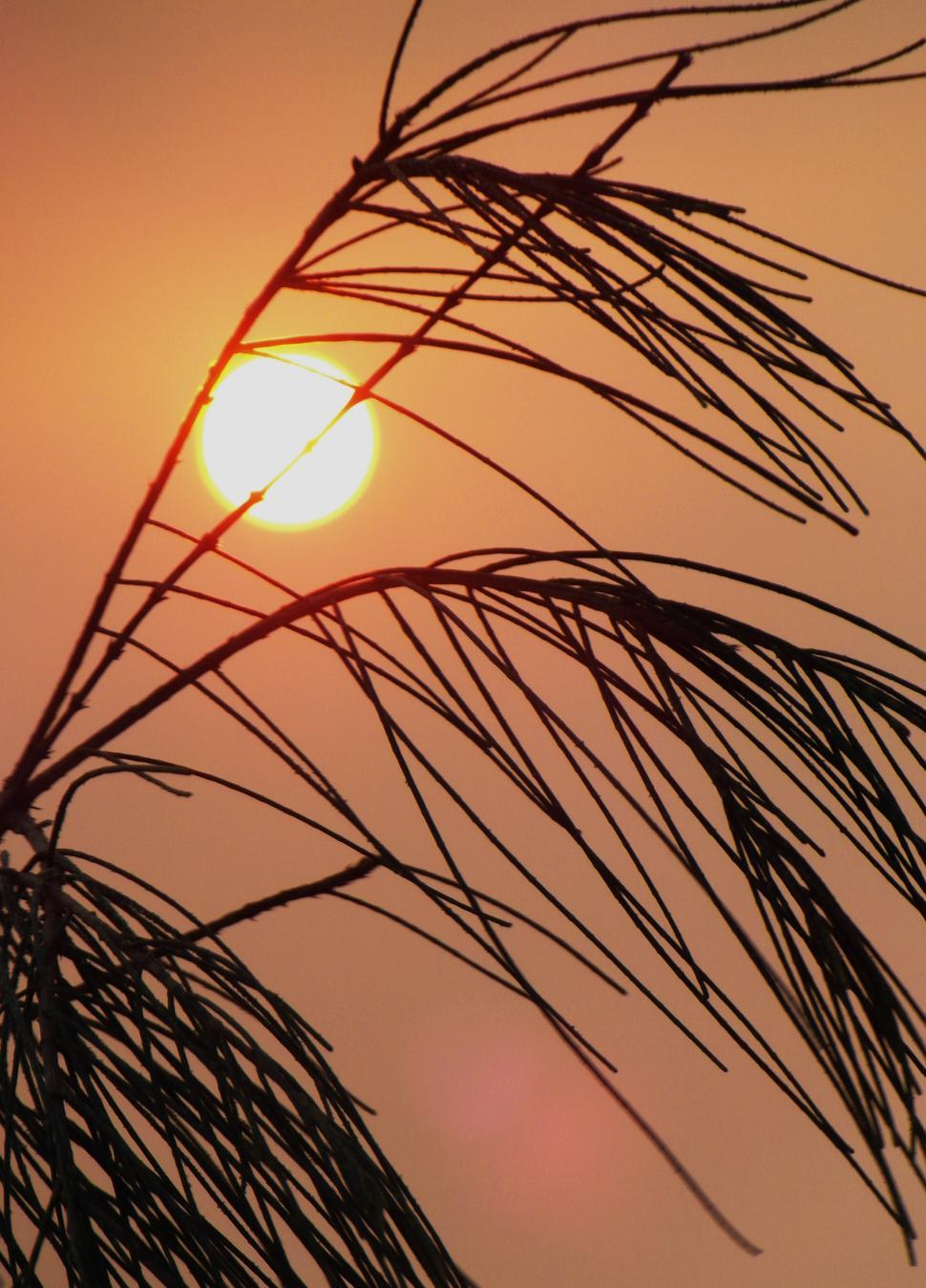 Download Free Stock HD Photo of Long Grass Sunset Silhouette Online