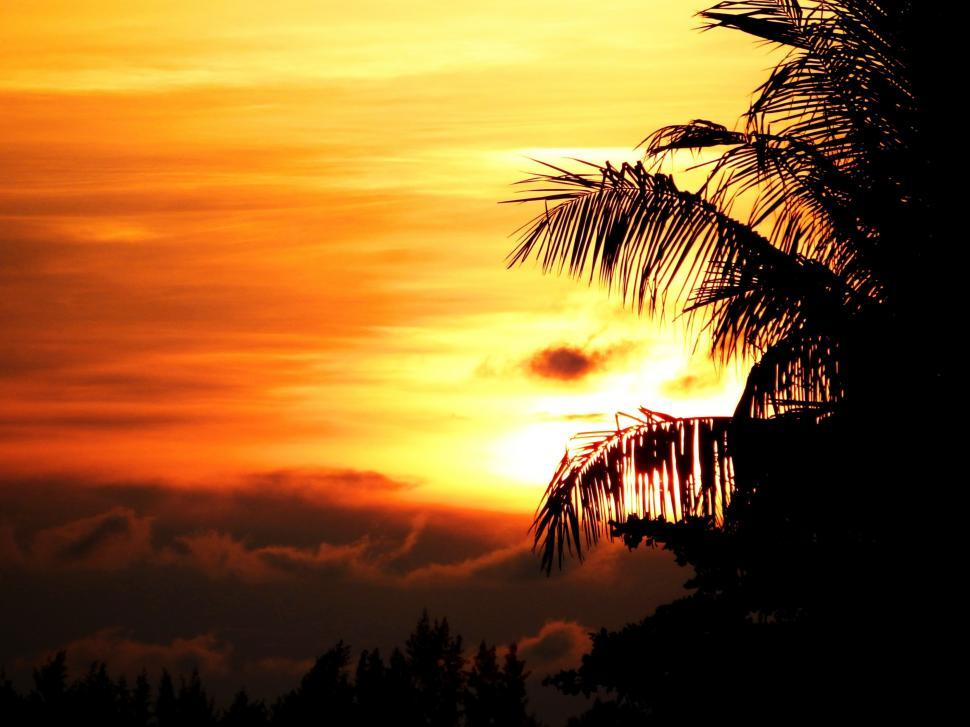 Download Free Stock HD Photo of Tropical Palm Tree Sunset Online
