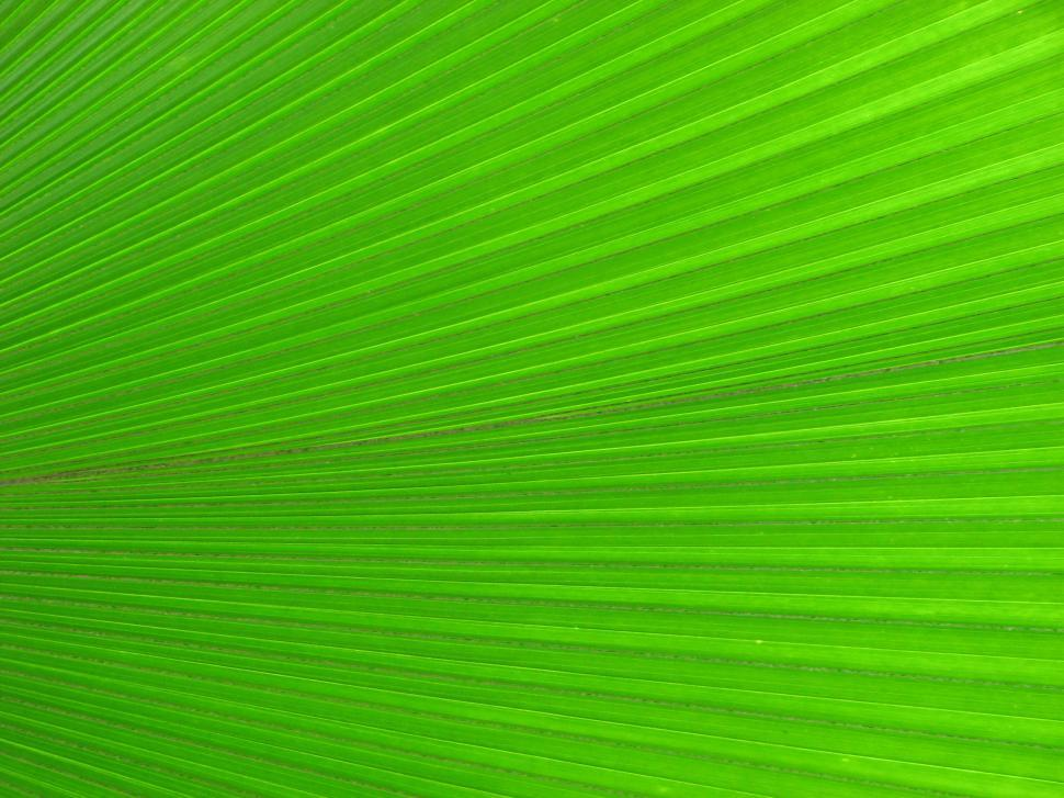 Download Free Stock HD Photo of Closeup of a bright green tropical leaf Online