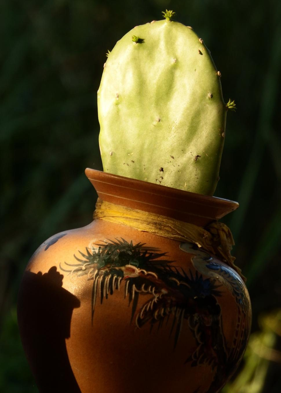 Download Free Stock HD Photo of Cactus in a Pot Online