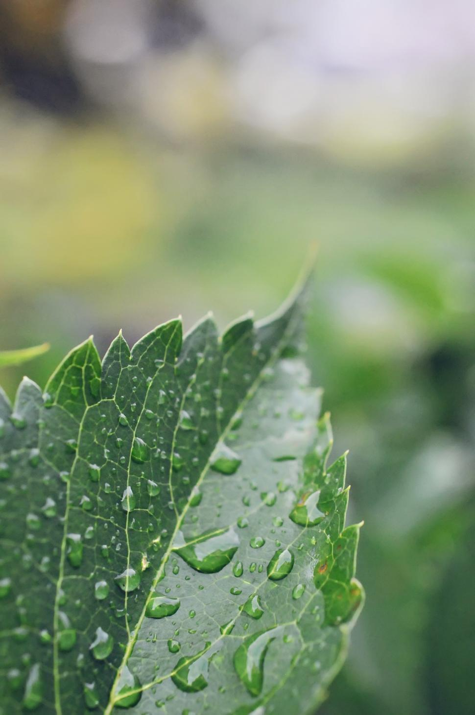 Download Free Stock HD Photo of Wet Leaf Online