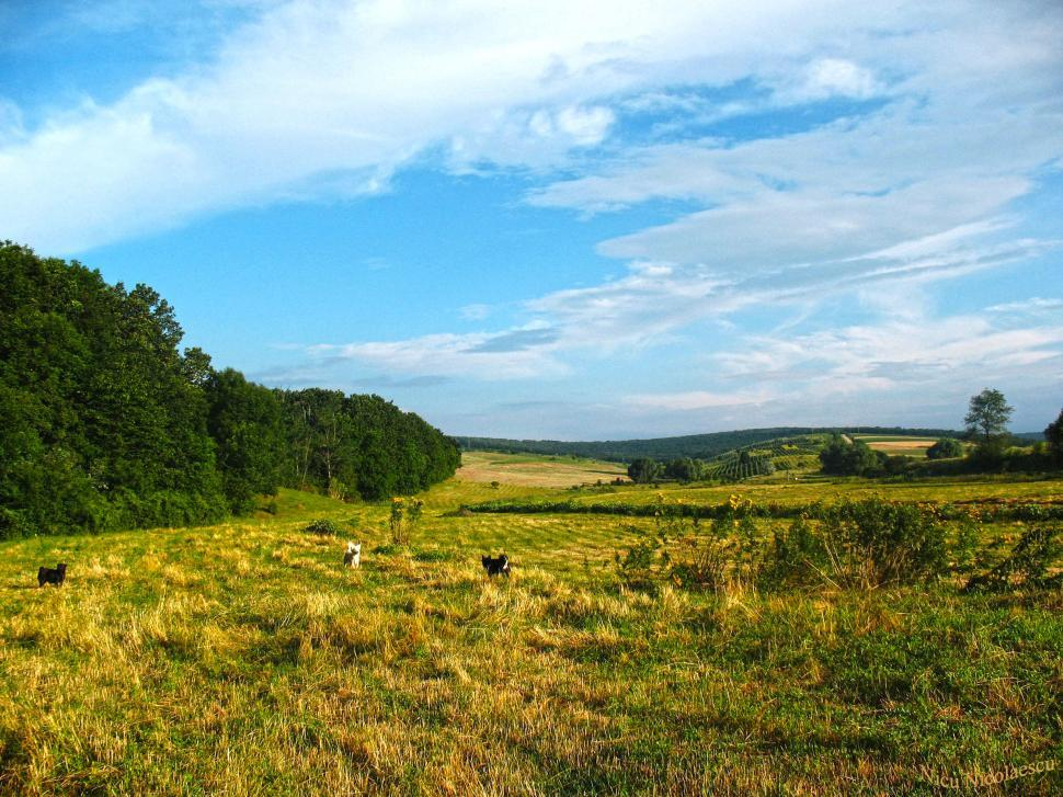 Download Free Stock HD Photo of Edge of the forest Online