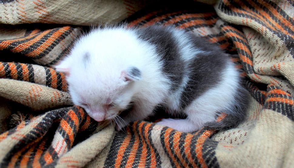 Download Free Stock HD Photo of Newborn kitten on rags Online