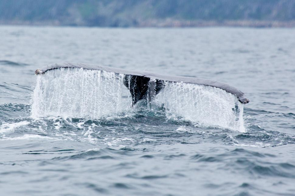 Download Free Stock HD Photo of Whale Online