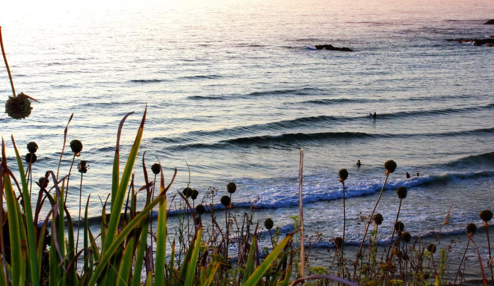 Download Free Stock HD Photo of Swimmers in the distance at sunset in Odeceixe Beach, southern P Online