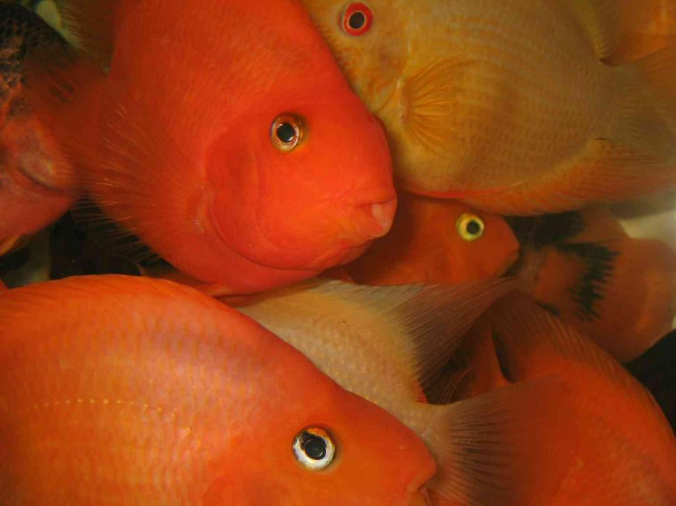 Download Free Stock HD Photo of Close up of tropical fishes Online