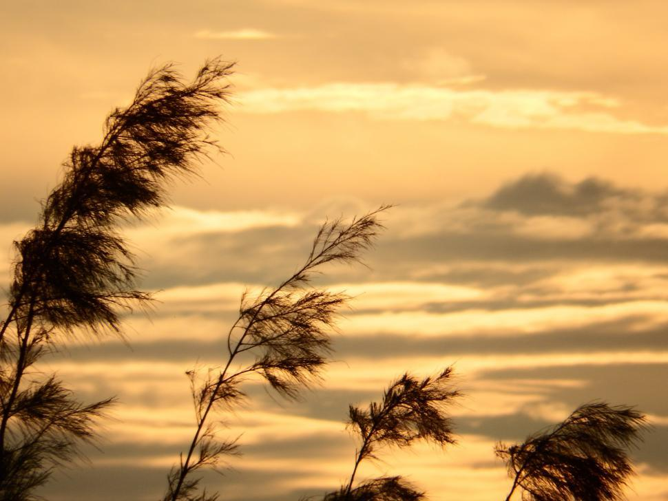 Download Free Stock HD Photo of Pine Trees Sunset Silhouette Online