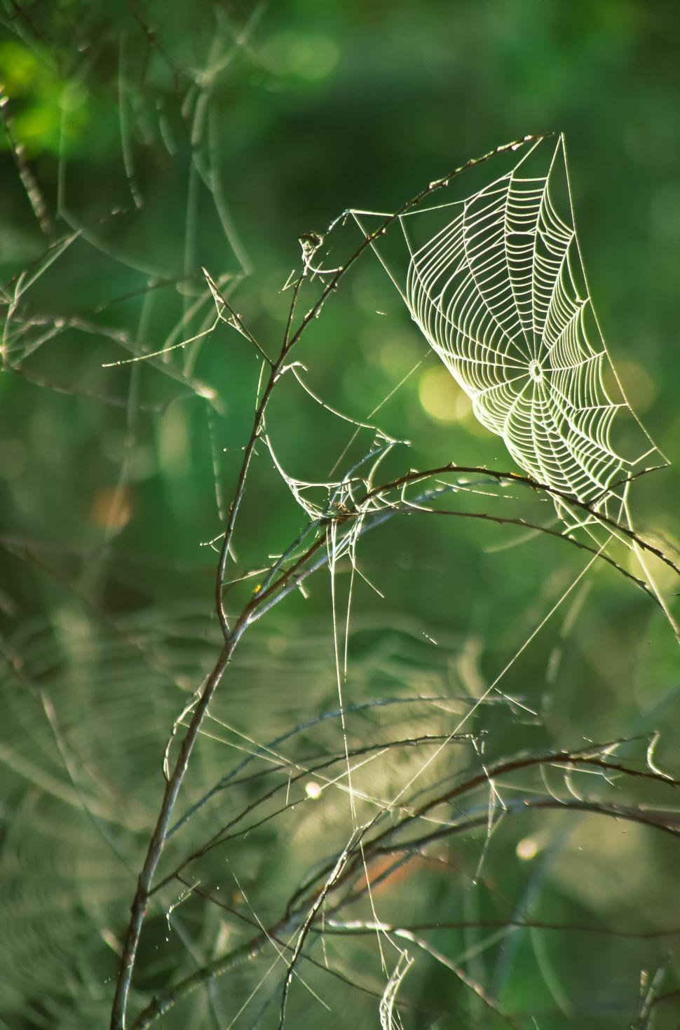 Download Free Stock HD Photo of Spider Web  Online