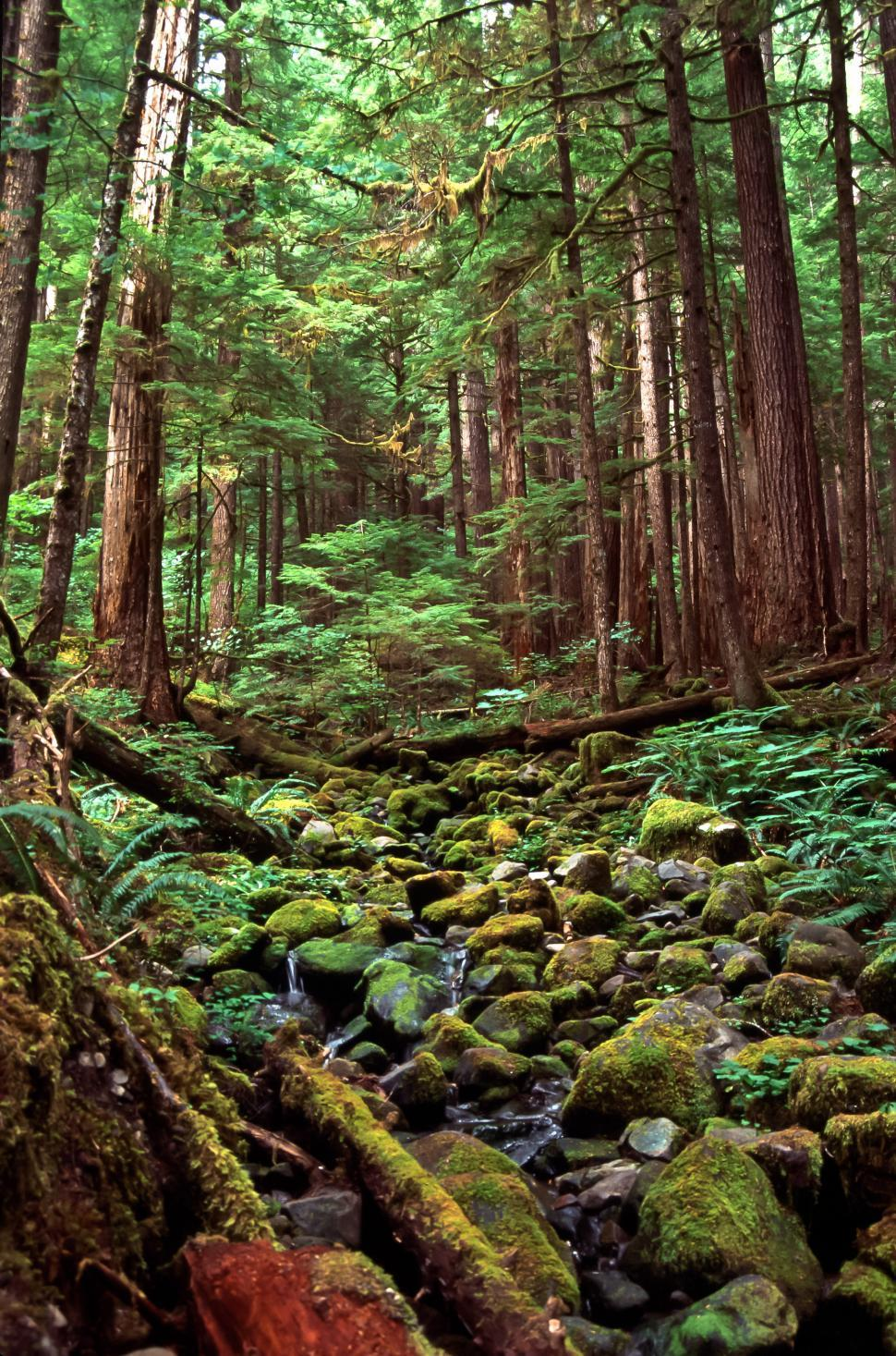Download Free Stock HD Photo of Rocky Forest Stream Online