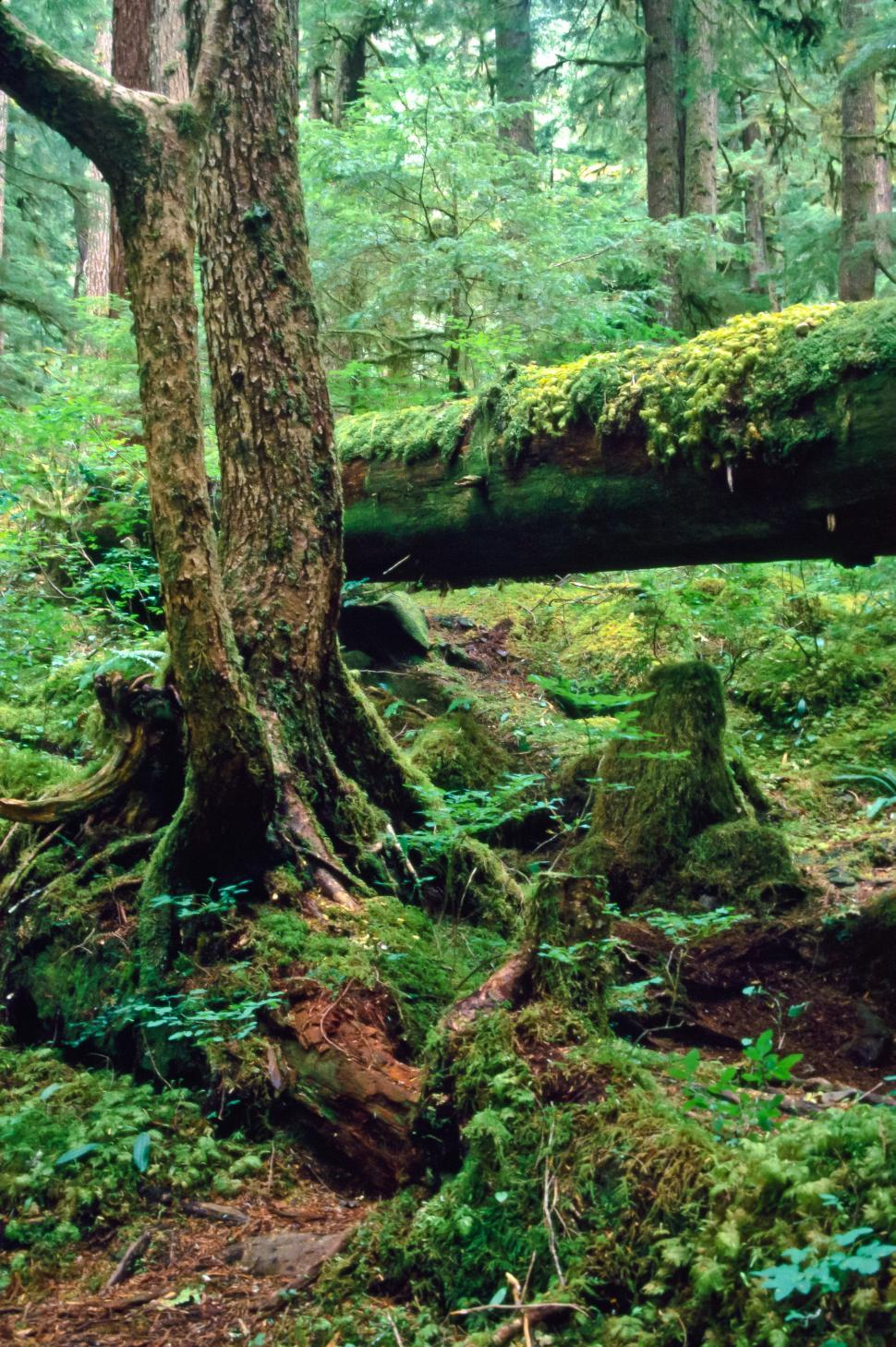 Download Free Stock HD Photo of Broken Tree Near Sol Duc Online