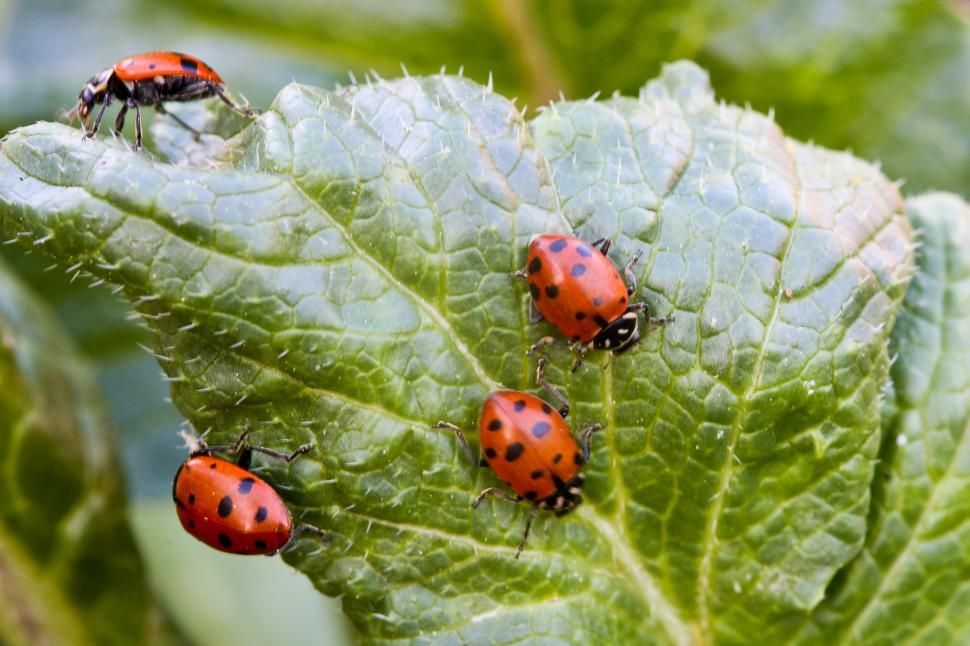 Download Free Stock HD Photo of Ladybugs Online