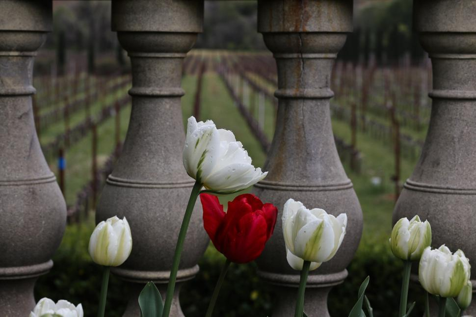 Download Free Stock HD Photo of Tulips on balcony Online