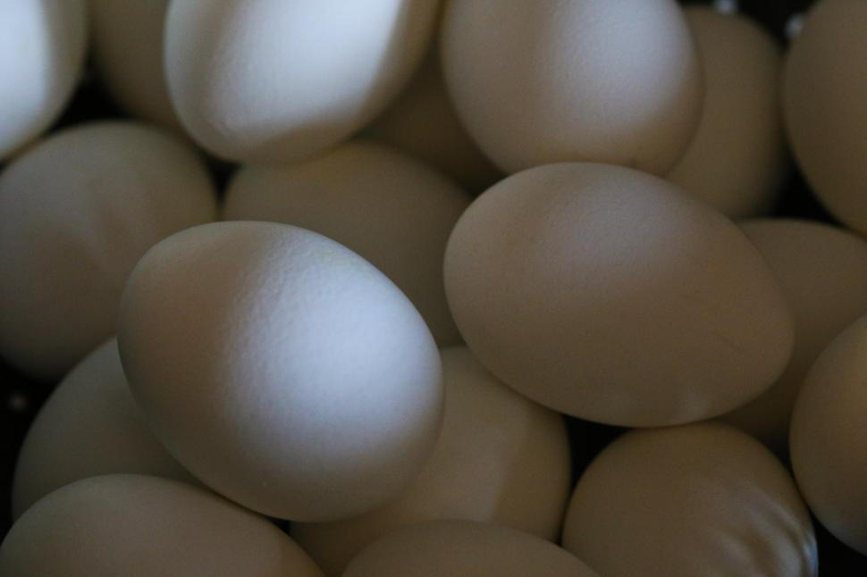 Download Free Stock HD Photo of Eggs background Online