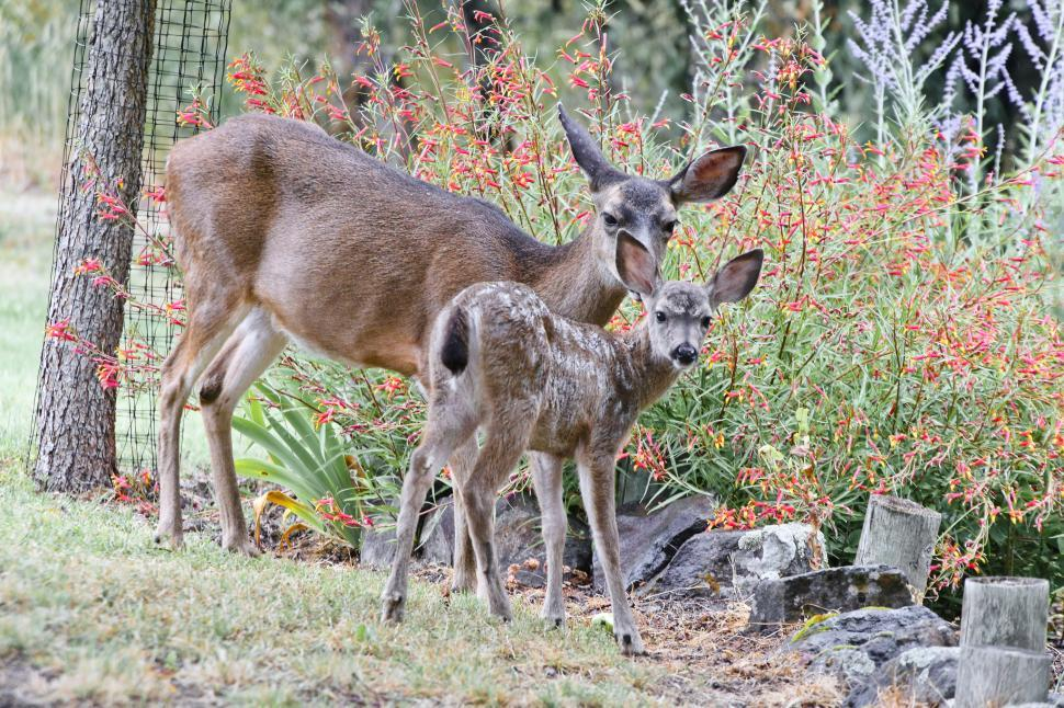 Download Free Stock HD Photo of Mother and fawn Online