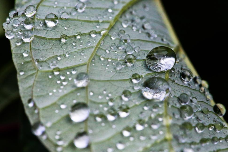 Download Free Stock HD Photo of Droplets Online