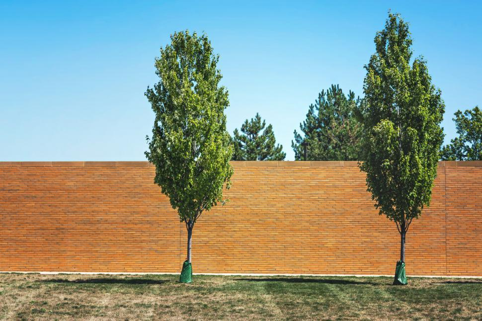 Download Free Stock HD Photo of Trees in the lawn Online