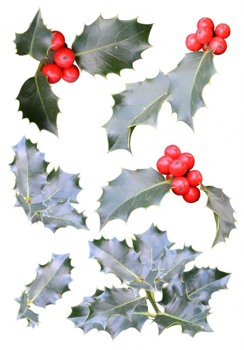 Download Free Stock HD Photo of Christmas holly cutouts Online