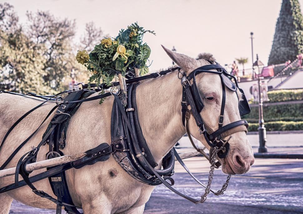 Download Free Stock HD Photo of Horse cart Online