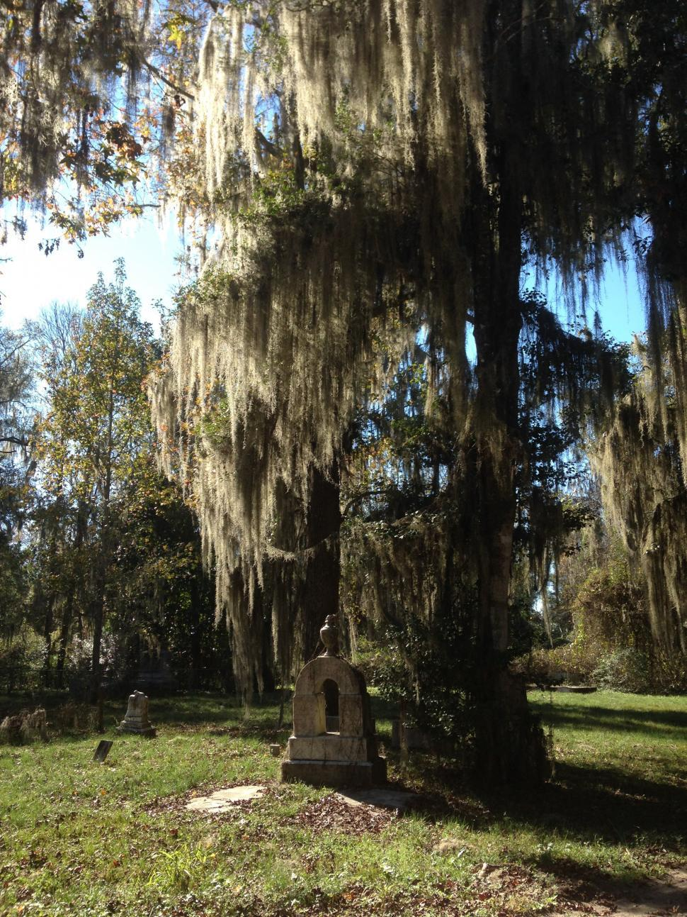 Download Free Stock HD Photo of Southern Cemetery Online