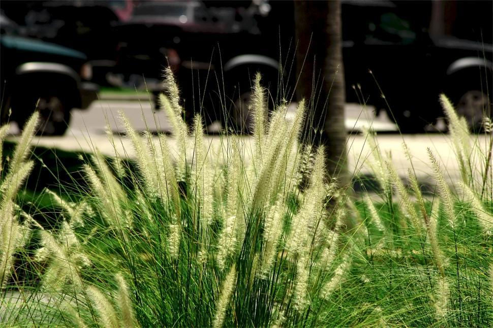 Download Free Stock HD Photo of Urban Plant Scenery #2 Online