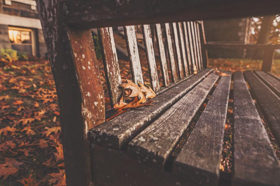 Download Free Stock HD Photo of Wooden bench in the park Online