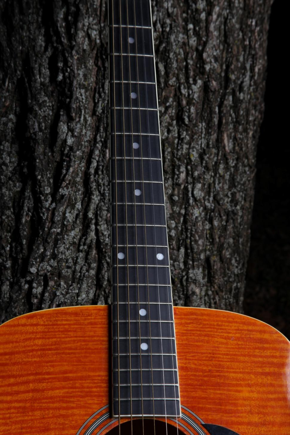 Download Free Stock HD Photo of Guitar neck against a tree. Online
