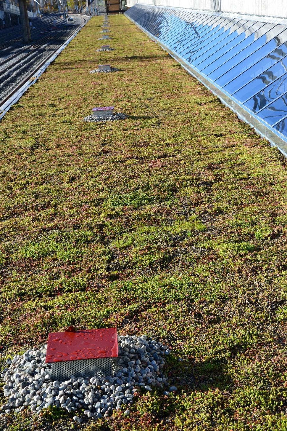 Download Free Stock HD Photo of Sedum green roof Online