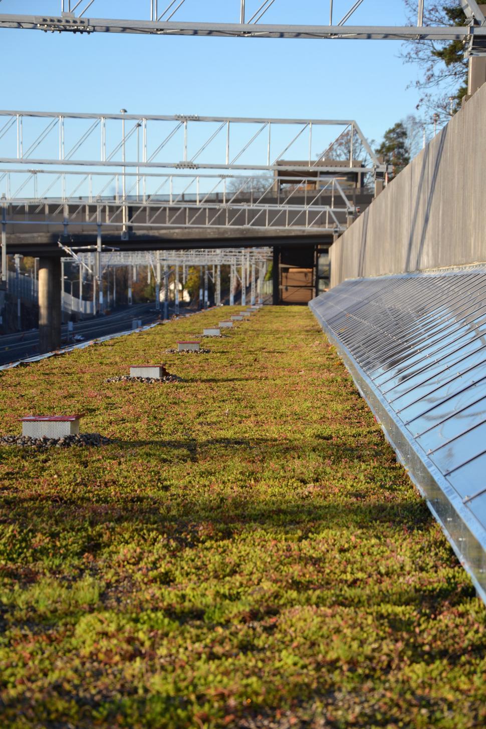 Download Free Stock HD Photo of Sedum green roof Online
