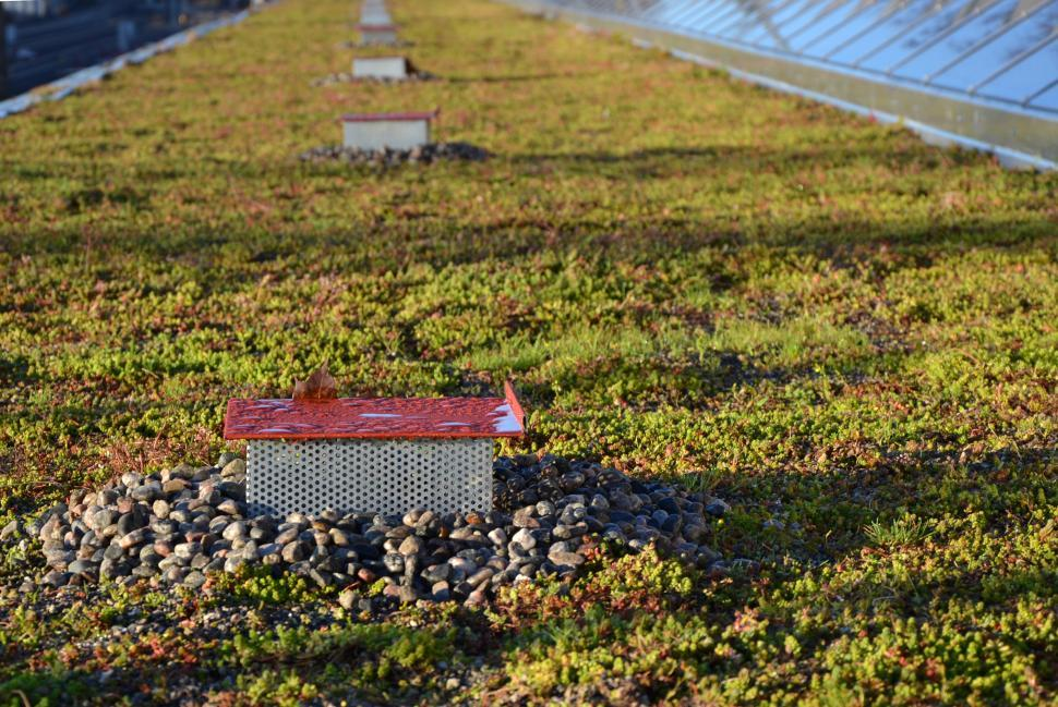 Download Free Stock HD Photo of Drainage on the green roof Online
