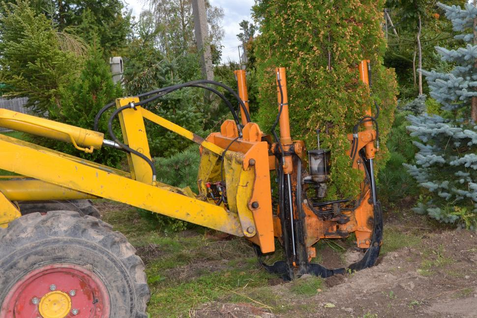 Free Stock Hd Photo Of Transplanting Arborvitae Online