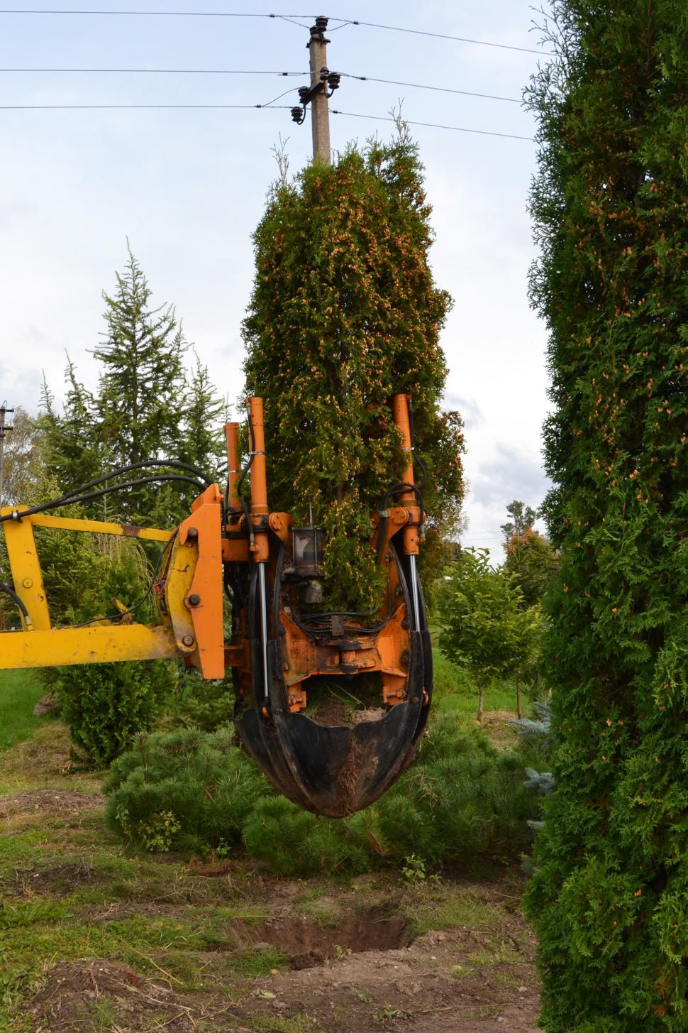 Download Free Stock HD Photo of Uplifting arborvitae Online