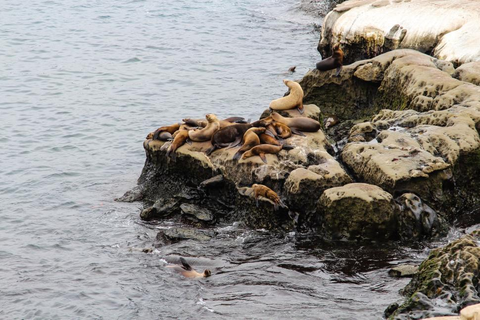 Download Free Stock HD Photo of California sea lion Online