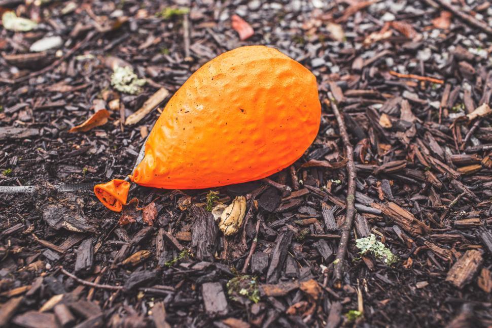 Download Free Stock HD Photo of Orange Helium Balloon Online
