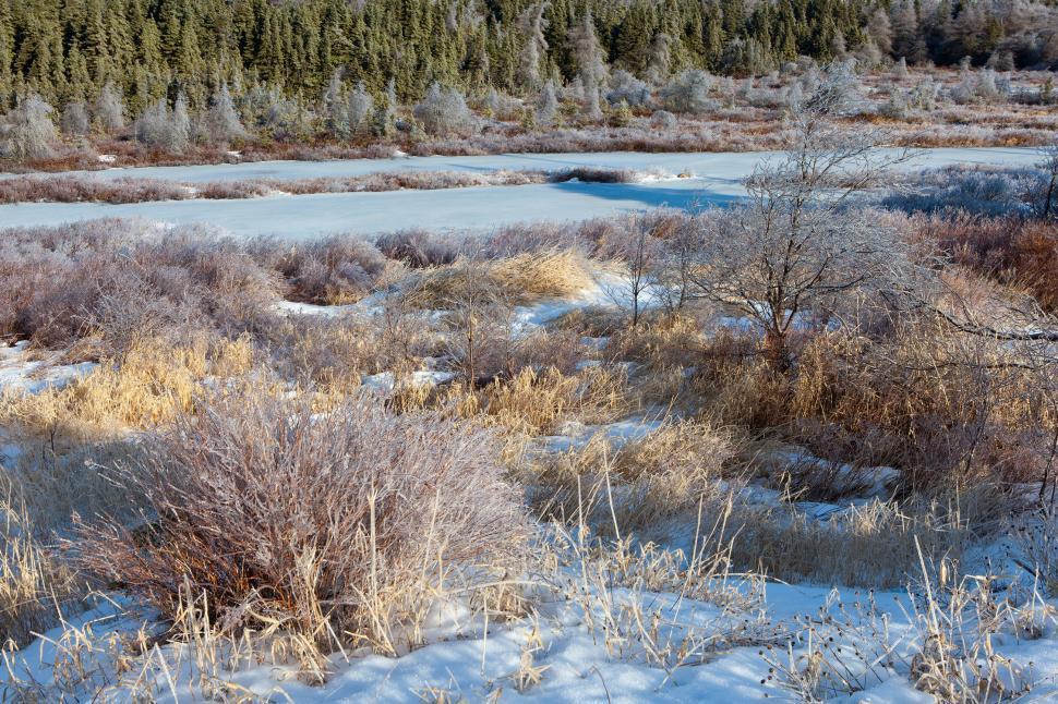 Download Free Stock HD Photo of Winter wonderland Online