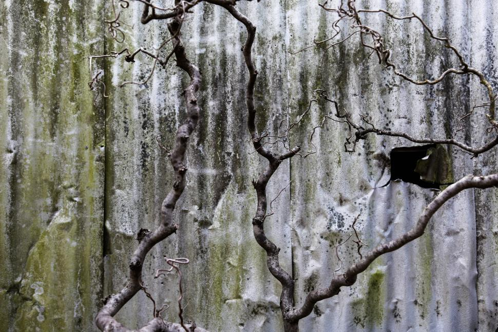 Download Free Stock HD Photo of Tree branches Online