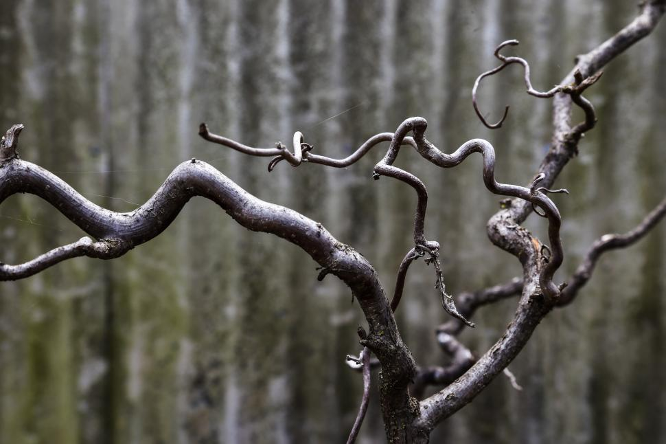 Download Free Stock HD Photo of Smooth tree branches Online