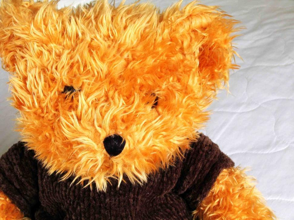 Download Free Stock HD Photo of Teddy bear Online