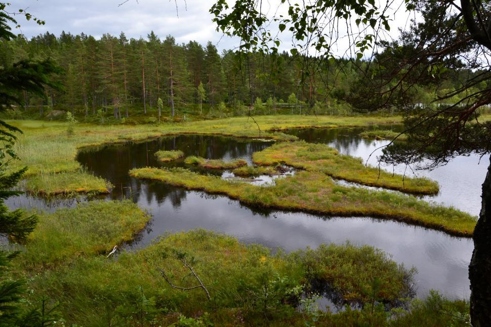 Download Free Stock HD Photo of Boggy lake shore Online