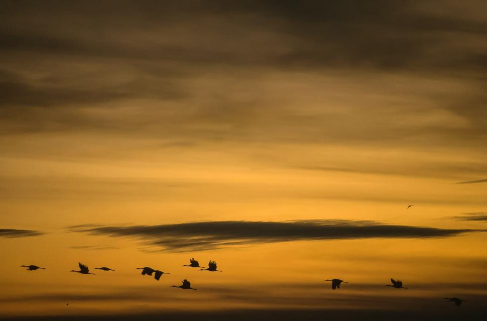 Download Free Stock HD Photo of Birds at Sunset Online