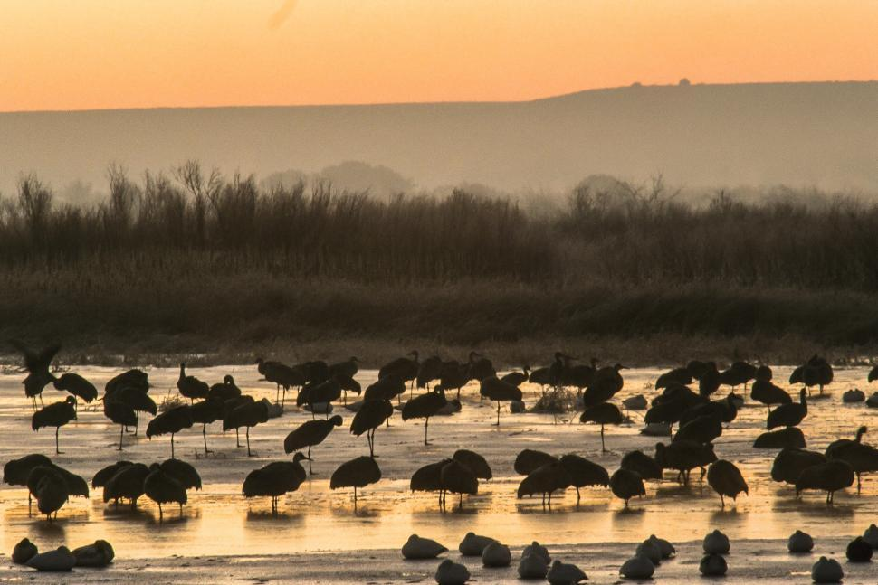 Wild Birds in a Marsh