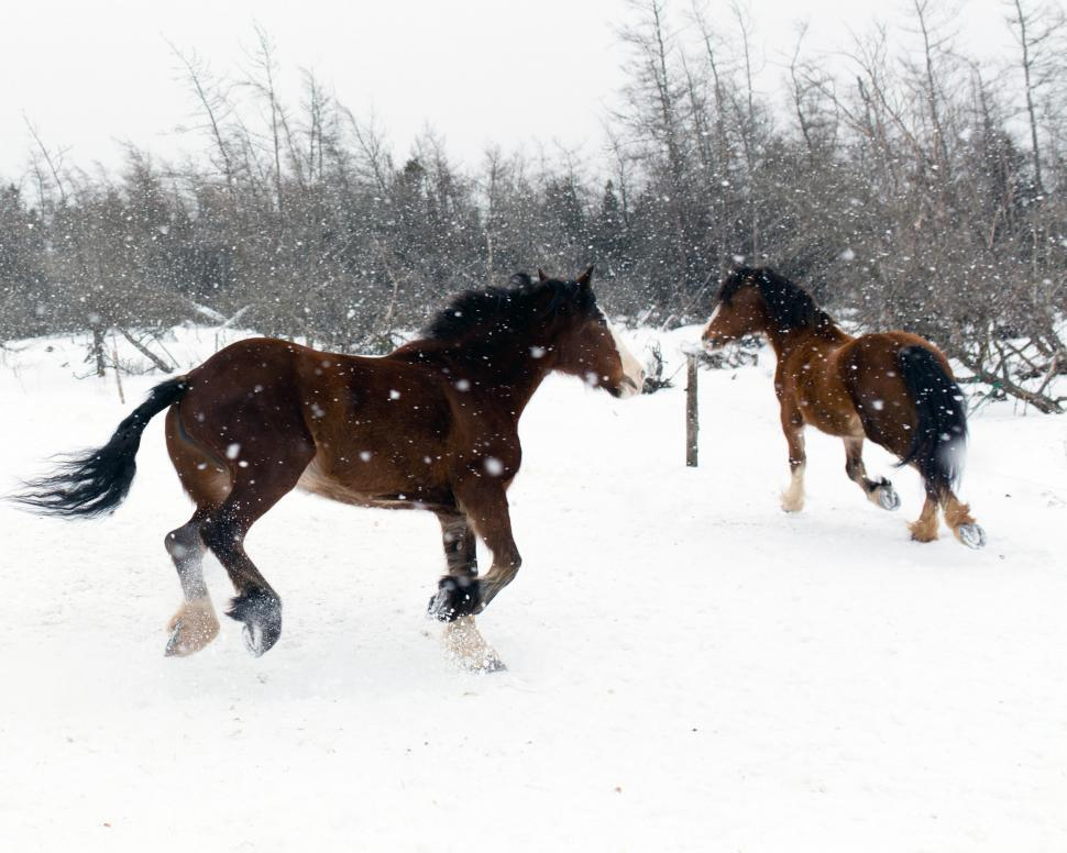 Download Free Stock HD Photo of Horses in winter Online