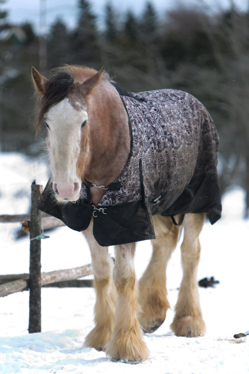 Download Free Stock HD Photo of Horse standing in snow Online