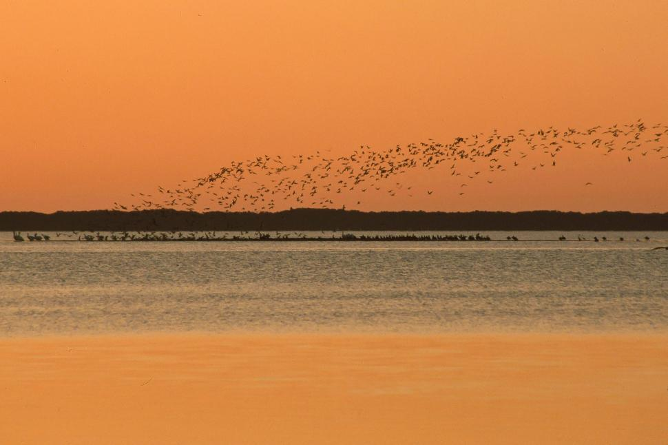 Download Free Stock HD Photo of Birds Flying at Sunrise Online