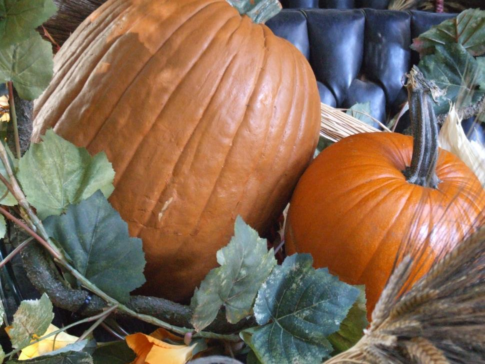 Download Free Stock HD Photo of Pumpkins Online