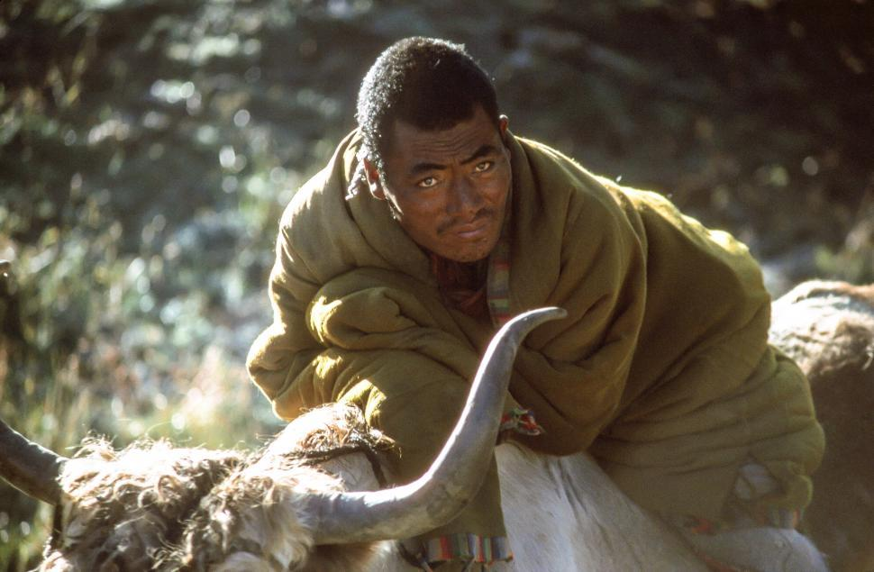 Download Free Stock HD Photo of Yak Herder on Yak Online